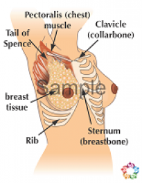 Location Of Breasts Sample